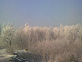 Frosted trees by Chakat-Northspring