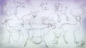 Animal anatomy practice