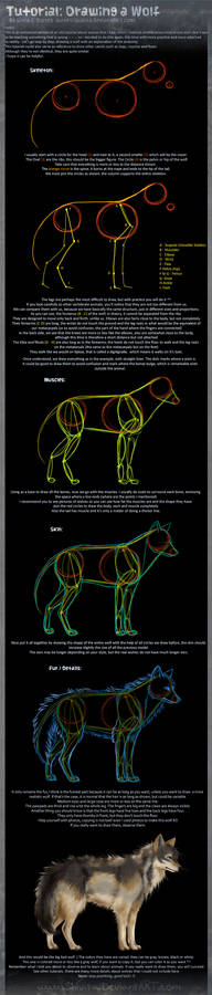 Tutorial: Drawing a Wolf