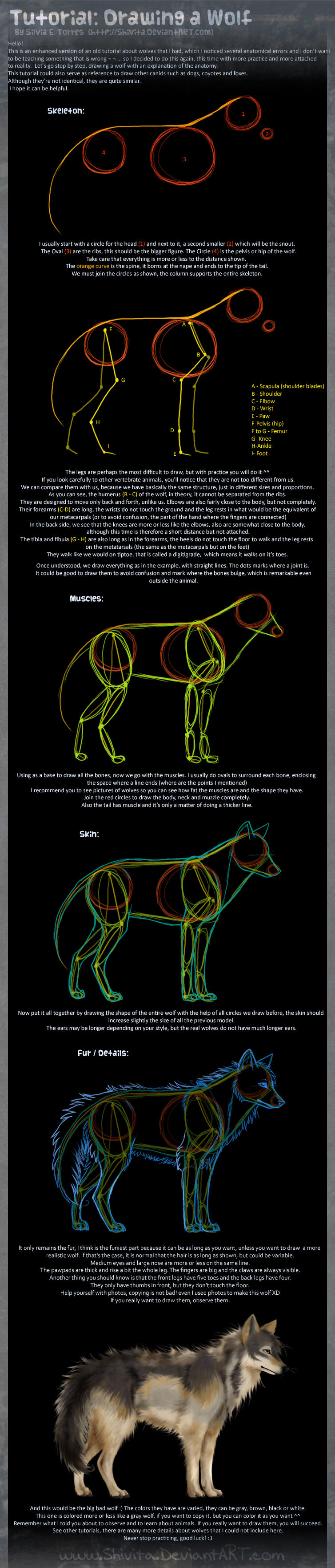 Tutorial: Drawing a Wolf by Shivita
