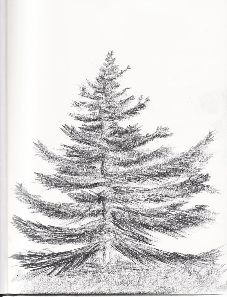 pine tree by digg409