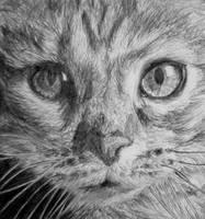 Cat by Insan3-Z0mbie