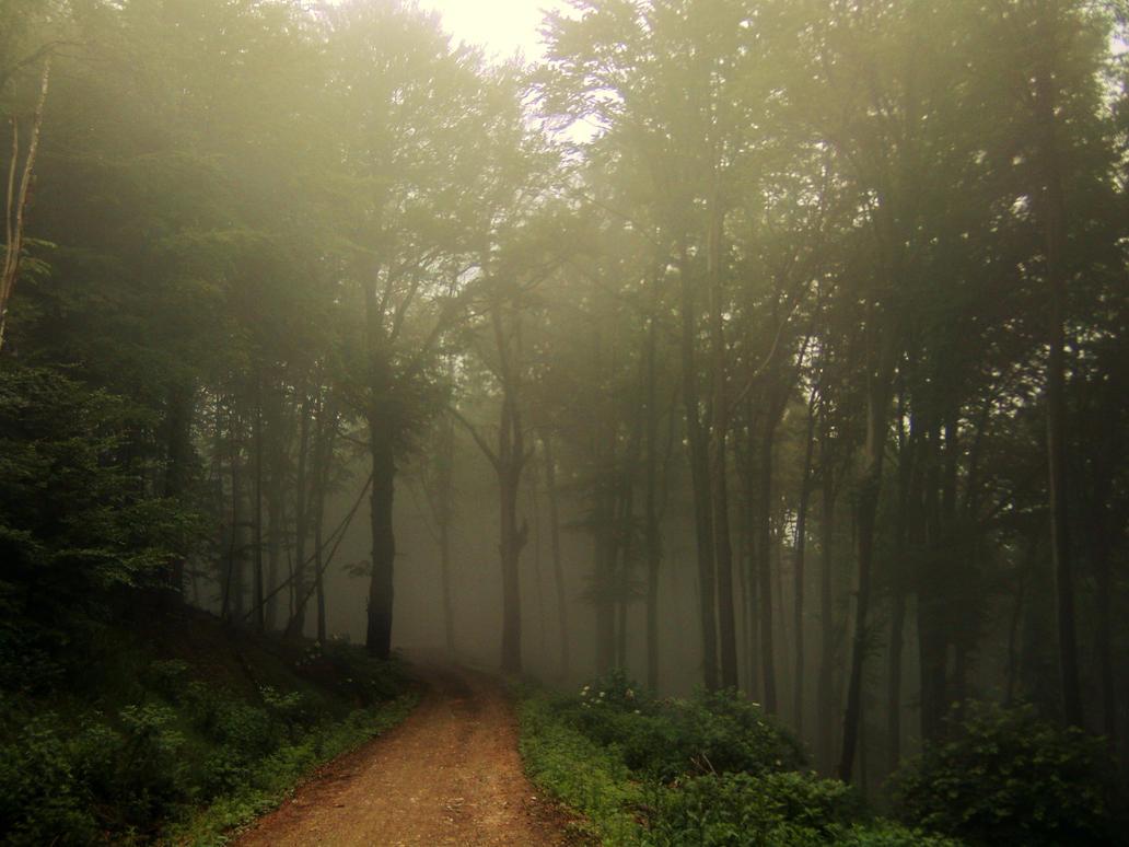 http://th03.deviantart.net/fs71/PRE/f/2012/162/6/7/spooky_forest_by_tallon_1-d533otu.jpg
