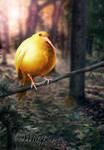 .::The Golden Snidget::.