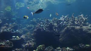 stock- ocean2