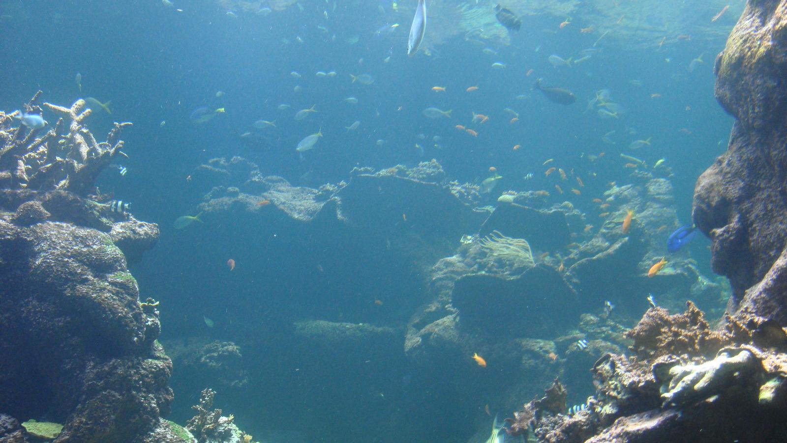 stock- ocean 2 by ToolKitten