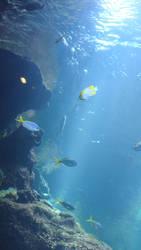 stock- ocean 6
