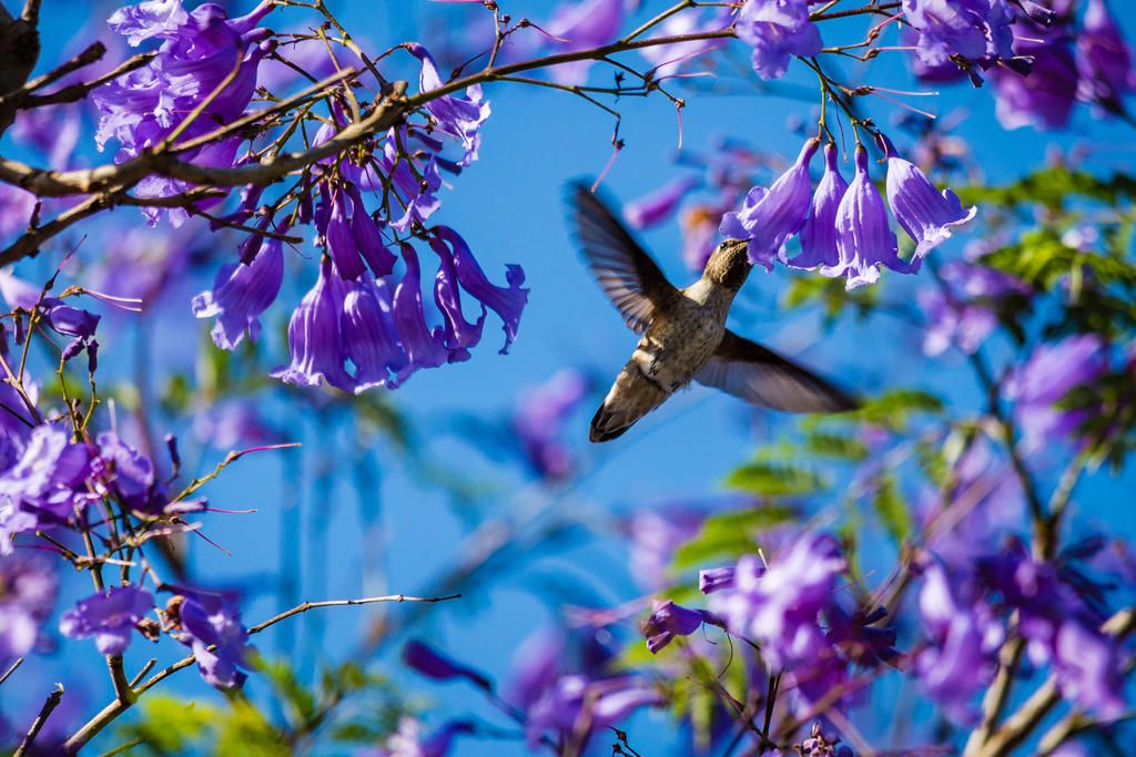 Nectar in purple blossom by hungdh