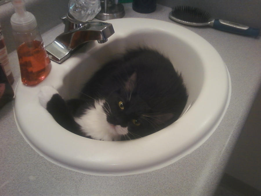 Sink Cat by Sara121089