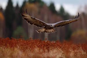 Flight by Konakira