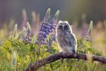 Spring Bloom Owl