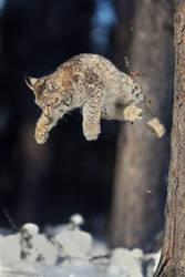 Jump for It by Konakira