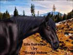 Black Trakehner
