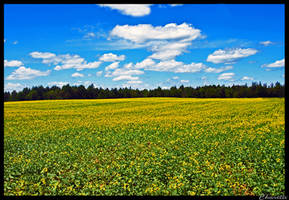 Fields of Yellow by simplyfate