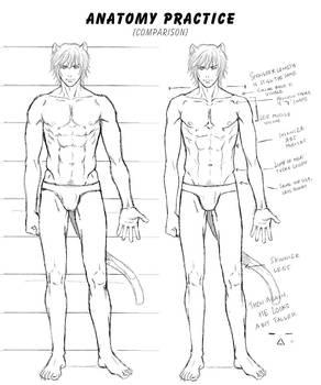 Anatomy practice : Comparison