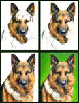 Progress of a Pencil Dog by Cataclysm-X