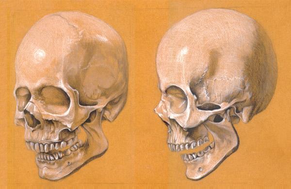 Human Skull Study by Cloverfish