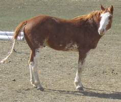 Horse 1 - Standing