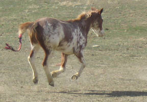 Horse 2 - Loping