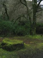 Connemara - Mossy Stone by Bladewing-Stock
