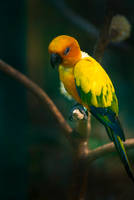 Parrot by Ibrahim-K
