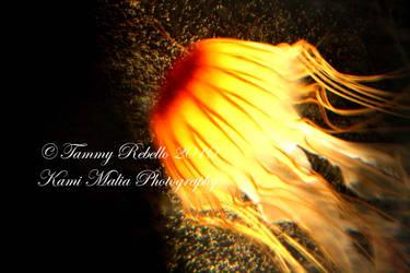 Jumpin' Jellyfish by TMR13