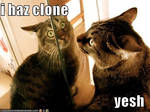 LOLcats 5