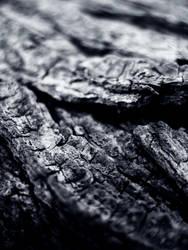 Bark, Dramatically by waterfowl