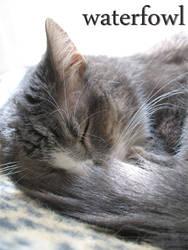 Sleeping Cat Dev ID by waterfowl