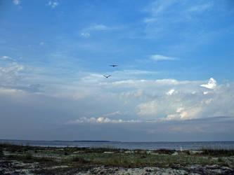 Wide Open Free by waterfowl