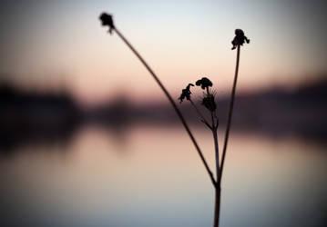 Tranquillity by Quaiasla