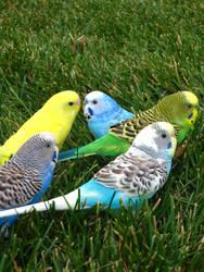 My Parakeet Rainbow