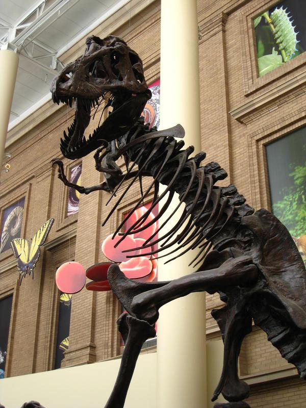 T-Rex Entrance Pose by shinigamisgem