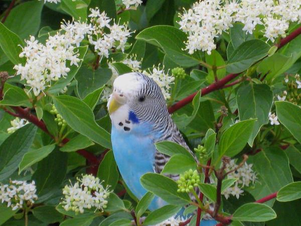 Handsom Blue in Spring by shinigamisgem