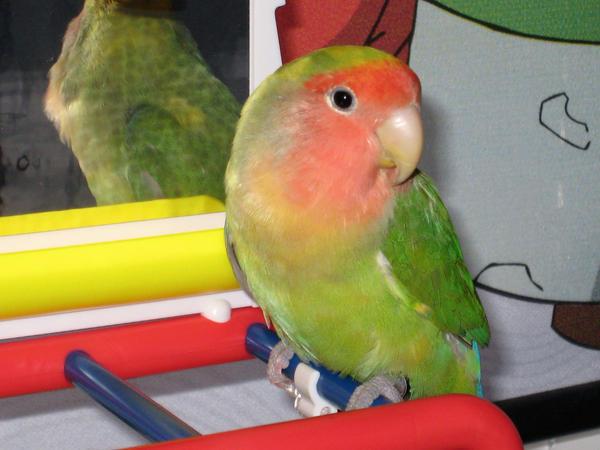 Playtime Love Bird by shinigamisgem