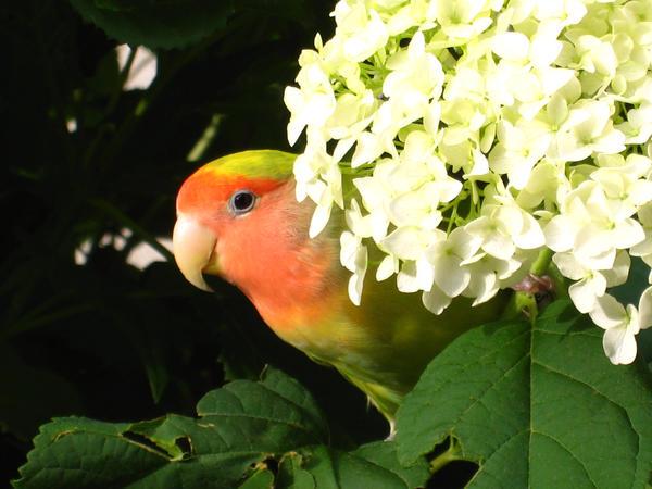 Fall Flower Love by shinigamisgem