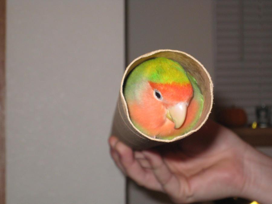 Tube Bird by shinigamisgem