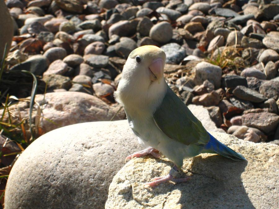 I'm on a rock by shinigamisgem