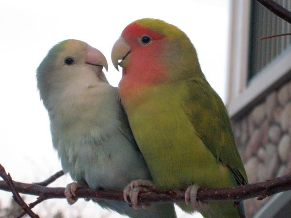 Love is Cute by shinigamisgem