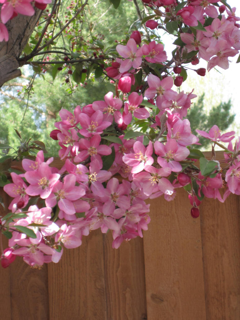 Hanging Around The Fence by shinigamisgem