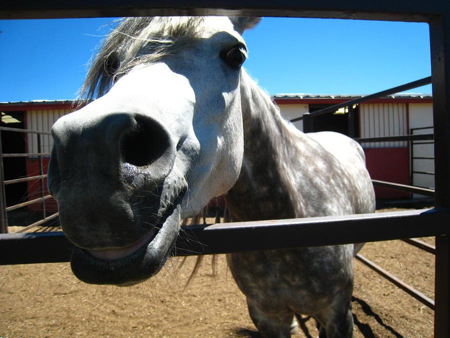 Horsey Smile by shinigamisgem