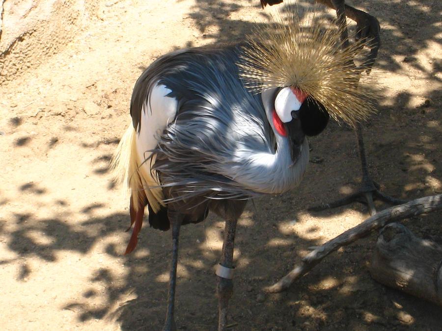 Crowned Bird by shinigamisgem