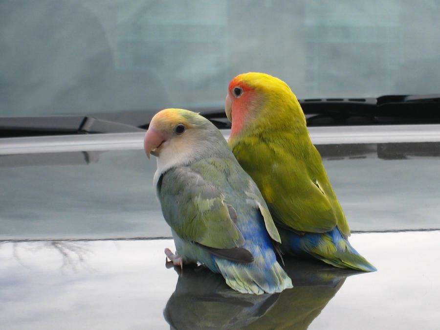 Hoodie Birds by shinigamisgem