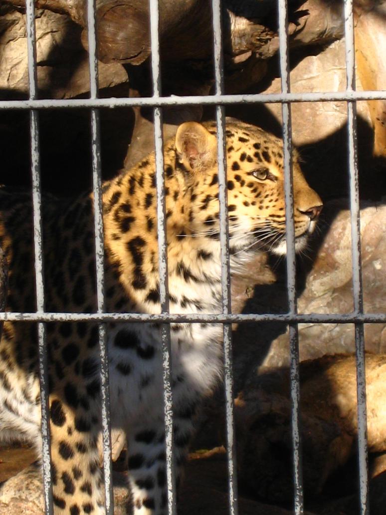 Jaguar Awaiting by shinigamisgem