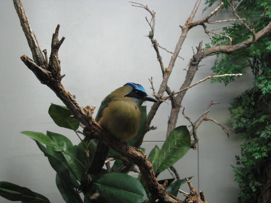 Little Lonely Bird by shinigamisgem