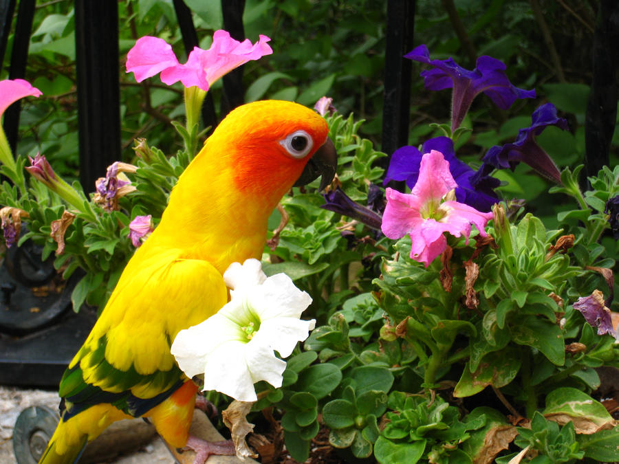 Lookin at pretty flowers by shinigamisgem