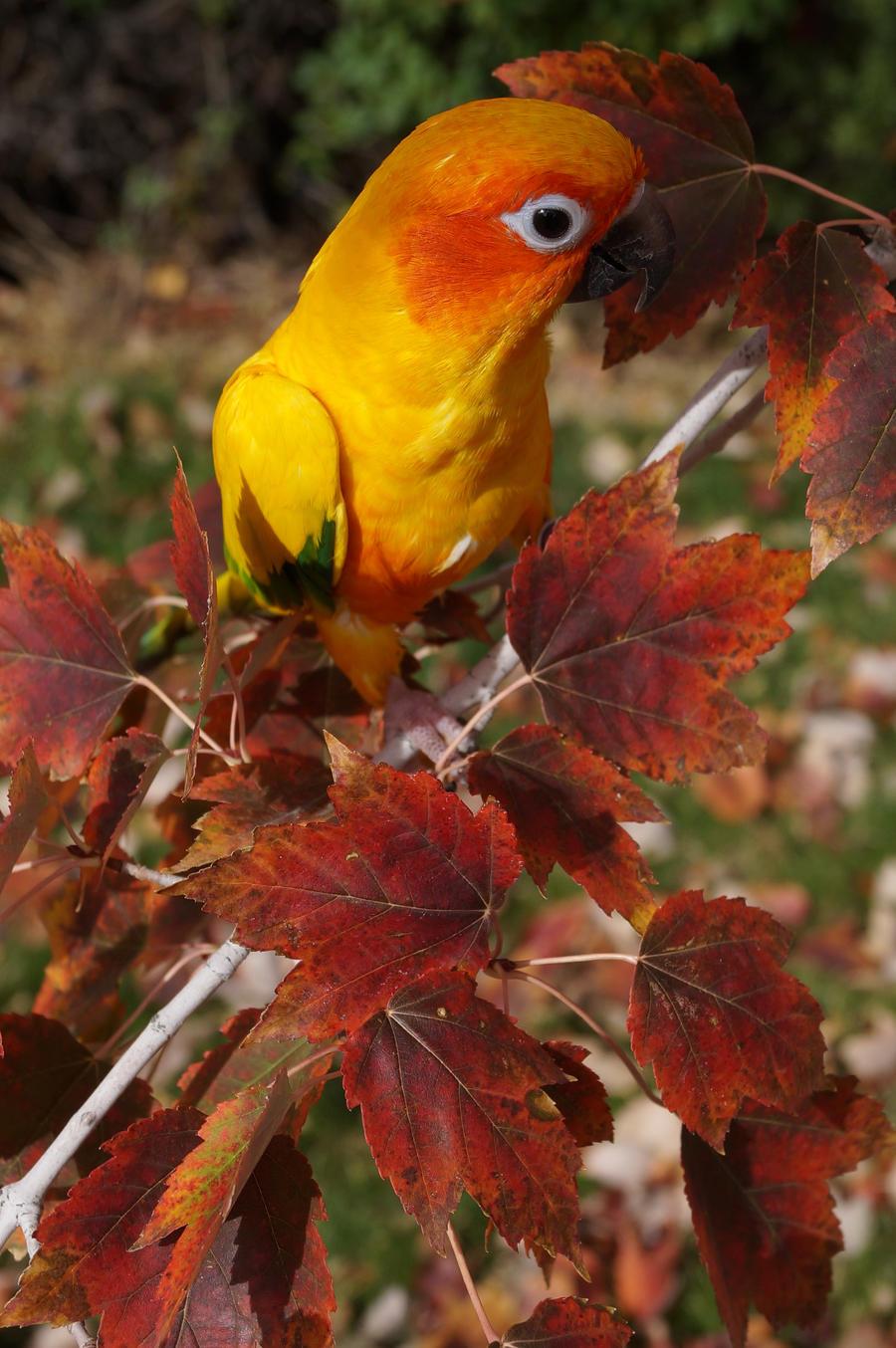 Dirty Leaves by shinigamisgem