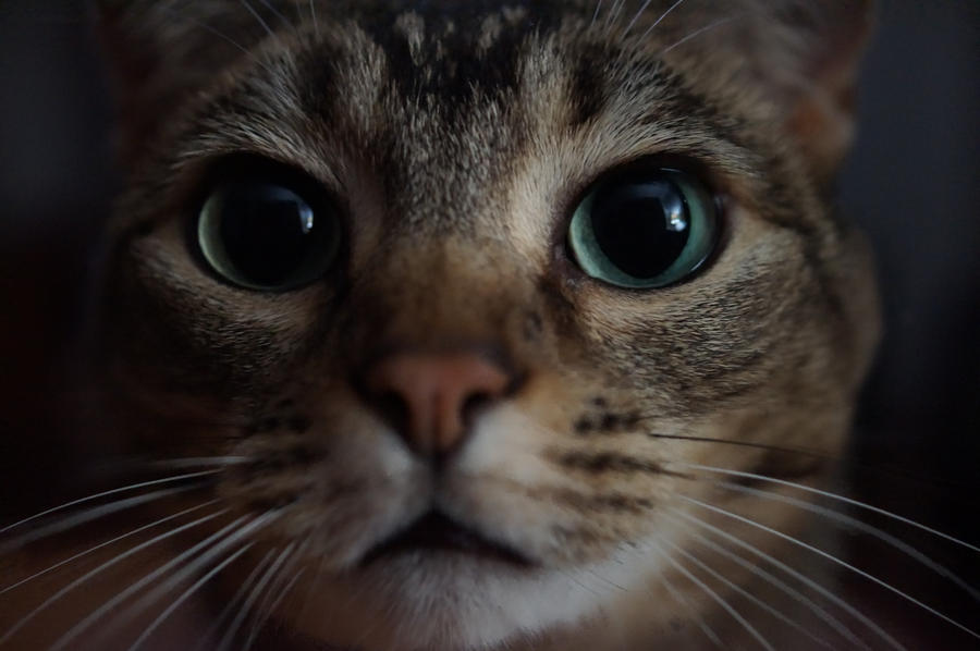 Kitty Face by shinigamisgem