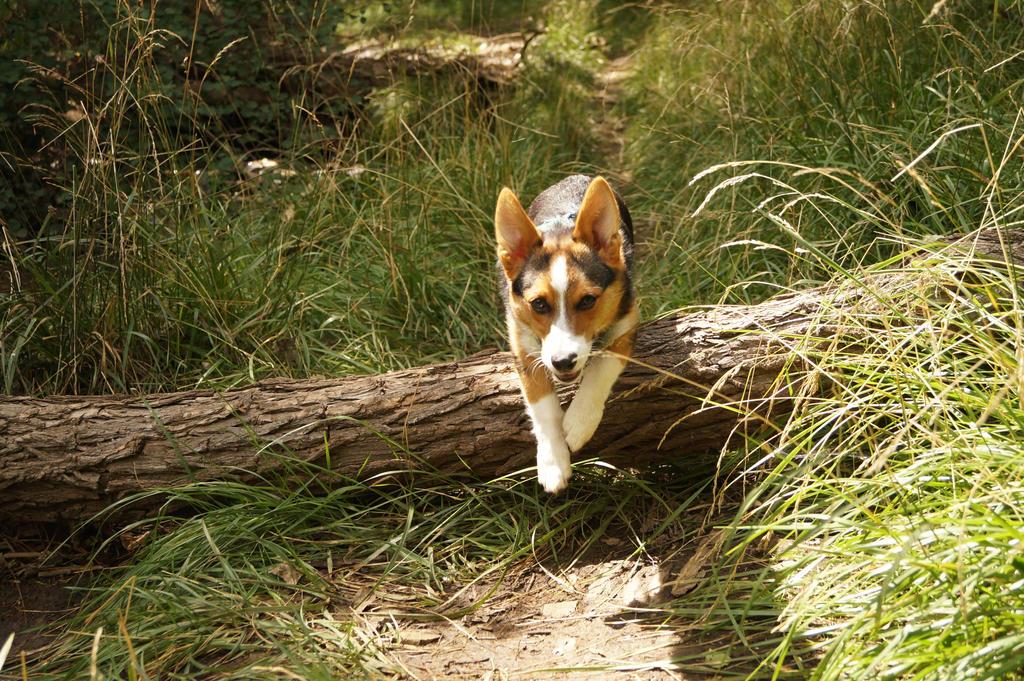 Jump that log by shinigamisgem