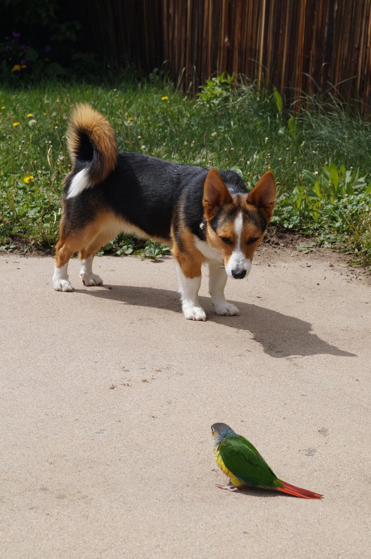 Dog Meets Bird by shinigamisgem